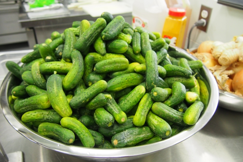 Cucumbers stacked and ready for pickling.